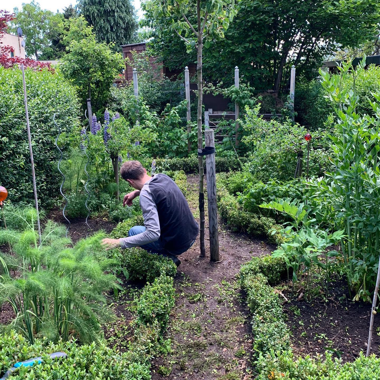 Green hell. Or: kitchen garden. #tomatos #buchsbaumgärtchen #hubbiesgarden