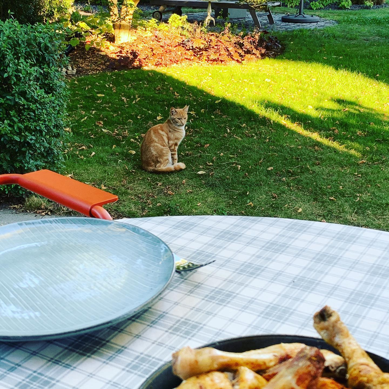 Poor Kitty. #louiechianti #chicken #